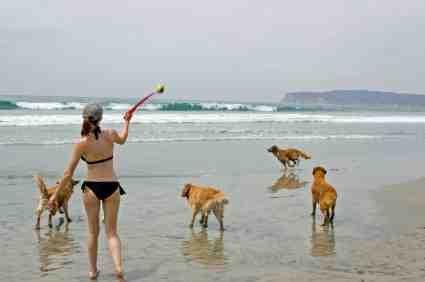 San Go Dog Beach