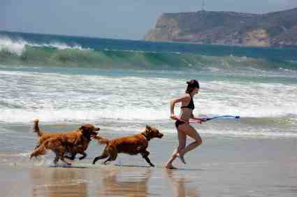 San Diego Beaches for Dogs