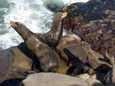abeach4U San Diego Beaches