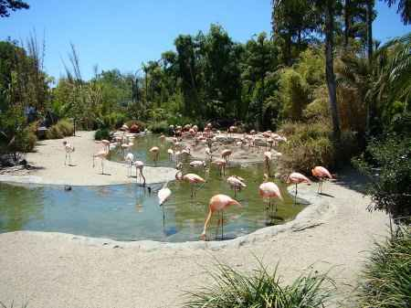 San diego wild animal park discount coupons