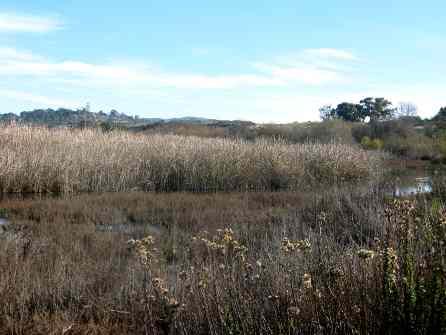 Nature Trail San Diego