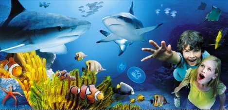 Aquarium San Diego Explore Under The Sea
