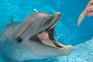 Sea World Discounts San Diego Discount Tickets