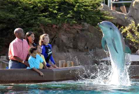 Sea World Discounts San Diego Theme Parks Southern California