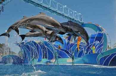 Sea world animal park