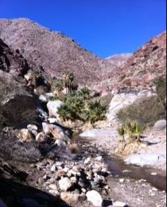 Anza Borrego Activities