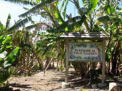 Quail Botanical Garden