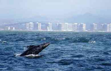Whale Watching San Diego