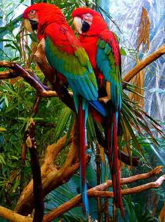 San Diego Zoo Coupons