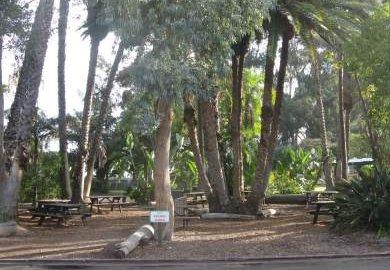 San Diego Zoo Picnic Area