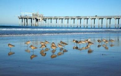 San Diego Beach Events